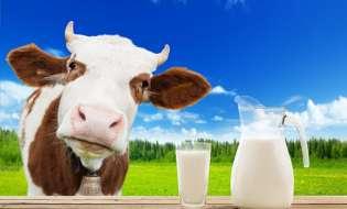 Biznes: Promocja polskich produktów mlecznych w Brukseli