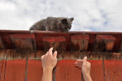 Belgia: Chciał ściągnąć kota z dachu, ale to jego musiano ratować!