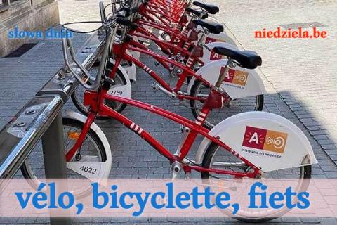 Słowa dnia: Vélo (bicyclette), fiets