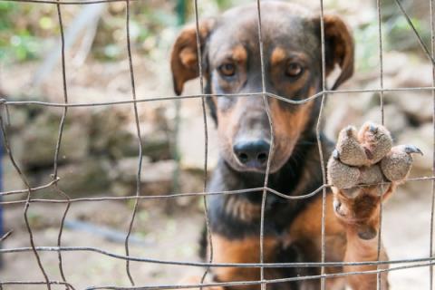 Flamandzkie schroniska dla zwierząt otrzymają wsparcie finansowe